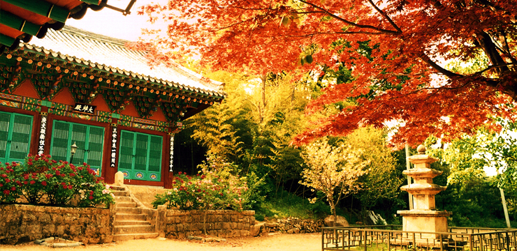 Yeongguk Temple (Yeongguksa): A harmony between a thousand old temple and a thousand old tree 이미지